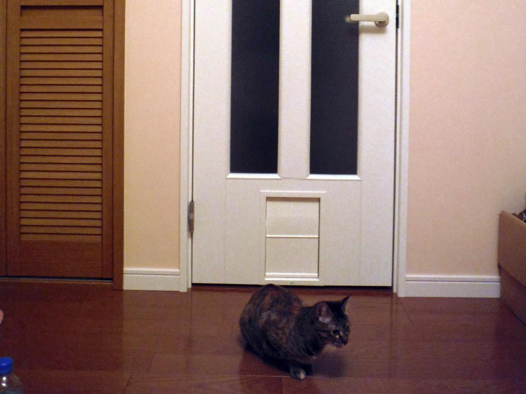好きな時に出入り自由 ペット自ら開閉できる ペットのためのドア