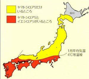 シロアリの発生地域と被害