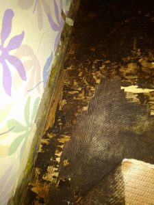 床をめくるとヤマトシロアリを発見しました。