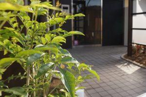 エントランスは最初に人が入る場所、建物の顔になる場所です。 ポールや外灯、植栽、郵便ポストなど雰囲気を感じる大切な空間ですね。