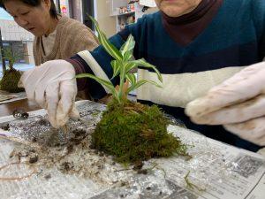 島の形の苔玉 イベントの「苔玉をつくろう」のワークショップ